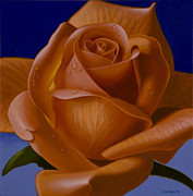Hyper Posters - Orange Rose with Blue Background Poster by Tony Chimento