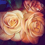Floral Art - #orange #roses #rose #colour #nature by Laura Hindle