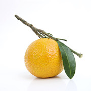 Foodstuffs Photos - Orange Satsuma by Bernard Jaubert