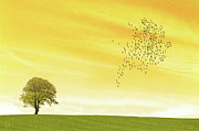 Flock Of Bird Art - Orange Sky by Image by J. Parsons