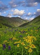 Delphinium Photos - Orange Sneezeweed And Delphinium by Tim Fitzharris