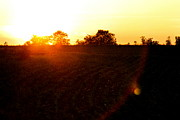 Cornfield Photos - Orange Sunset and Red Lens Flare by Angela Rath