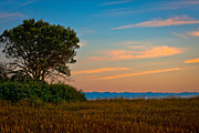 Johnny Sandaire Prints - Orange Sunset with Tree Print by Johnny Sandaire