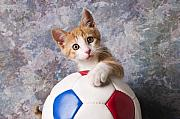 Domestic-pet Posters - Orange tabby kitten with soccer ball Poster by Garry Gay