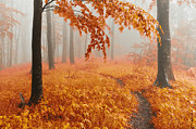 Autumn Trees Photo Prints - Orange Wood Print by Evgeni Dinev