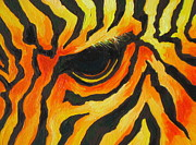 Zoo Painting Prints - Orange Zebra Print by Sandy Tracey