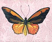 Insects Originals - Oranged Birdwing by Mindy Lighthipe