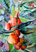 Green Drawings Originals - Oranges by Mindy Newman