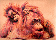 Fauna Drawings Originals - Orangutan Mom by Ramon  Castellanos