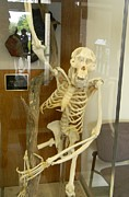 Vet Originals - Orangutan Skeleton by Warren Thompson