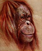 Nature Mixed Media Posters - Orangutan Smiling - Sketch  Poster by Svetlana Ledneva-Schukina