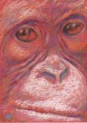 Suzie Majikol-Maier - Orangutan