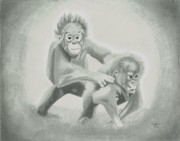 Monkeys Drawings - Orangutans by Matthew Moore