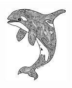 Hand Drawn Drawings - Orca by Carol Lynne