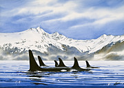 Marine Art Framed Prints - Orca Framed Print by James Williamson