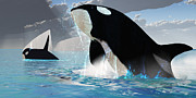 Orca Digital Art Acrylic Prints - Orca Whales Acrylic Print by Corey Ford