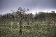 Orchard At Altapass Art - Orchard at Altapass by Williams-Cairns Photography LLC