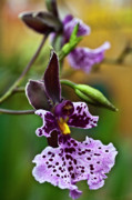 My Sold Greeting Cards - Orchid - Caucaea rhodosticta by Heiko Koehrer-Wagner
