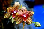 Orchid 17 Print by Marty Koch