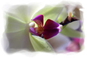 Orchid Flowers Posters - Orchid 2 Poster by David Bearden