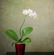 Mary Hershberger - Orchid 2