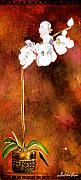 Beautiful Flowers Paintings - Orchid 4 by Laura Pierre-Louis