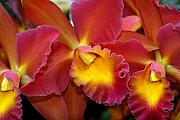 Orchid 8 Print by Marty Koch