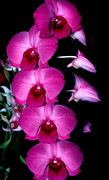 Monocots Photos - Orchid 8 by Terry Elniski
