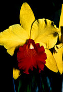 Monocots Photos - Orchid 9 by Terry Elniski