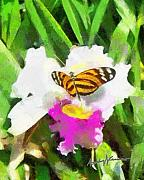 Fushia Digital Art - Orchid and Butterfly by Anthony Caruso