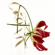Orchid Print by Bernard Jaubert