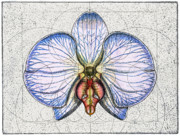 Flower Design Prints - Orchid Print by Charles Harden