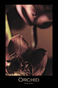 Greeting Cards With Text Posters - Orchid Cymbidium Poster by Jayne Logan