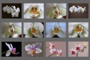 Floral Artwork Framed Prints - Orchid Fine Art Collection Framed Print by Juergen Roth