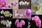 Orchids Posters - Orchid Fine Art Flower Photography Poster by Juergen Roth