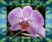 Flower Photos Framed Prints - Orchid Goodness Framed Print by Bell And Todd