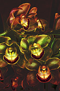 Orchidaceae Framed Prints - Orchid Hype Framed Print by Bill Tiepelman