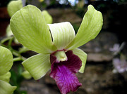 Wildlife And Nature Photos Art - Orchid II - Landscape by Kevin Feeley