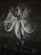 Tropics Drawings - Orchid in Black-and-White by Estephy Sabin Figueroa
