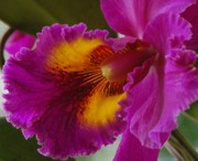 Debbie Karnes Prints - Orchid in the Wild Print by Debbie Karnes