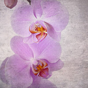 Parchment Art - Orchid by Jane Rix
