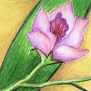 Lilac Drawings - Orchid by Judith Correa