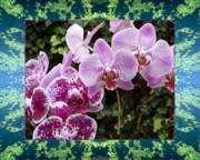Flower Photos Framed Prints - Orchid Kindness Framed Print by Bell And Todd
