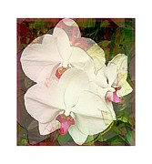 Easter Flowers Prints - Orchid Ladies Print by Mindy Newman