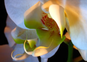 Natural Abstract Photos - Orchid Mask No. 2 by Louie Rochon