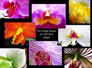 Orchid Framed Prints - Orchid Paintings Framed Print by Judee Stalmack