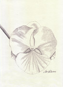 Orchid Drawings - Orchid Phalaenopsis Artic Threshold by Jose Valeriano