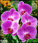 Blooming Digital Art Prints - Orchid Quintuplets  Print by Sue Melvin