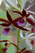Floral Digital Art Framed Prints - Orchid Sonata Framed Print by Suzanne Gaff