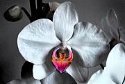 Flora Digital Art Originals - Orchid by Terence Davis